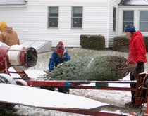 Pleasant Valley Tree Farm - Wrapping Christmas Trees